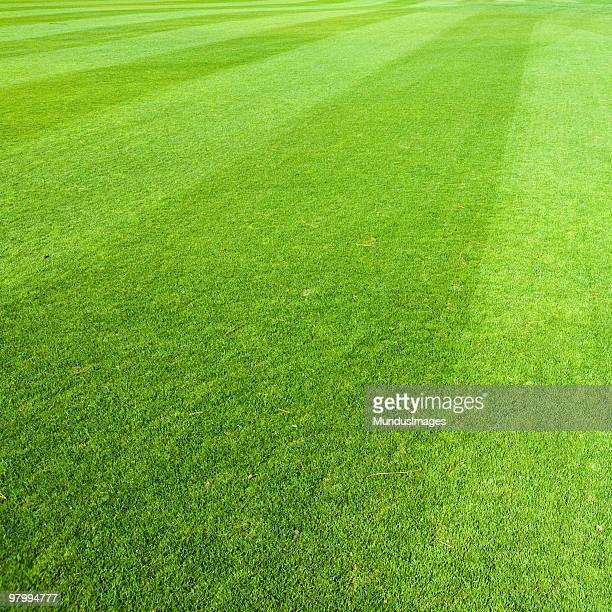 Freshly Cut Green Grass with Diagonal Lines