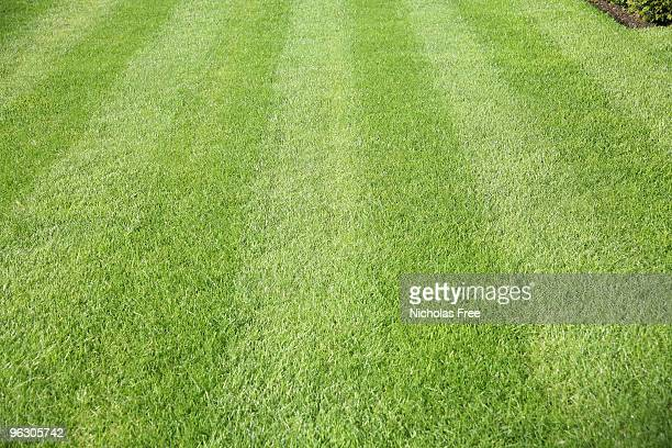 freshly cut green grass with mower stripes - striped stock photos and pictures