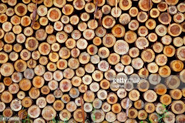 Freshly cut tree logs, full frame