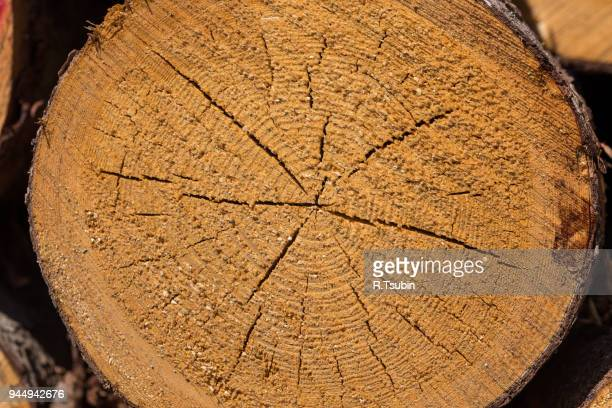 freshly cut tree logs - チーク ストックフォトと画像