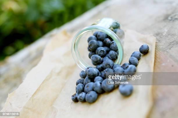 Freshly harvested blueberries in the garden