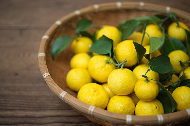 Freshly harvested organic Yuzu (Japanese citrus)