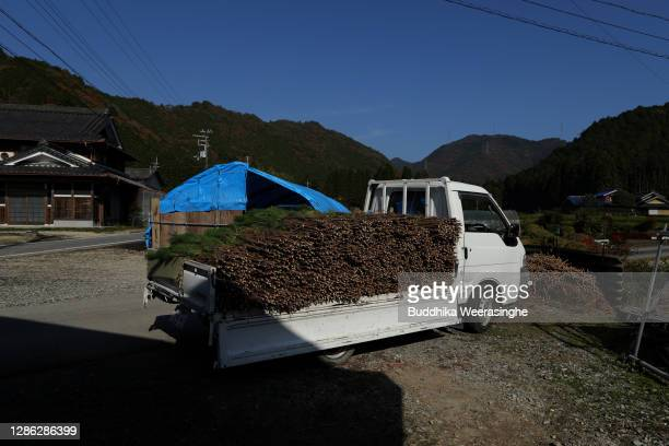 Freshly harvested three-year-old Wakamatsu trees sit a semi-trailer ready for shipping at Nagomi Farm on November 18, 2020 in Minato, Hyogo, Japan....