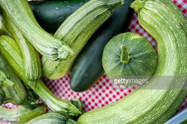 Freshly harvested zucchini and cucumbers