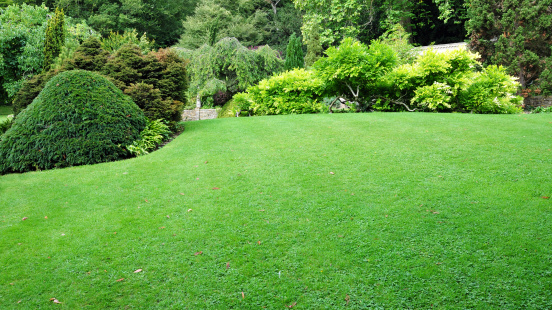Freshly mowed green lawn with lush trees around 152981484