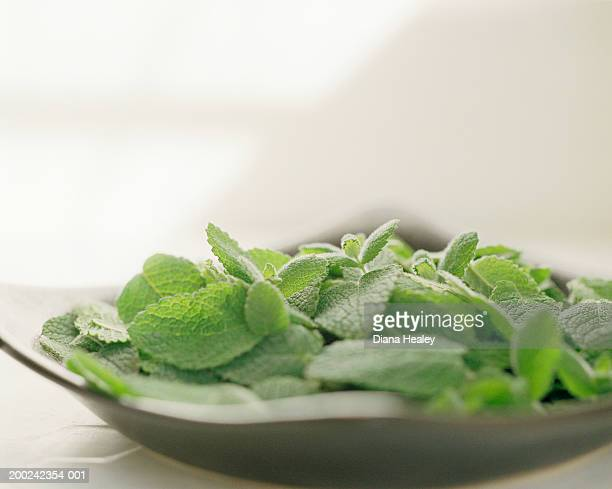 Freshly picked apple mint in square dish