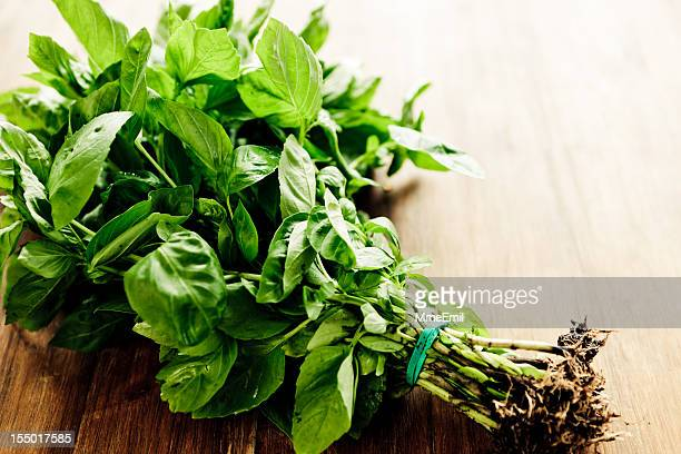 Freshly picked bunch of basil on wooden table