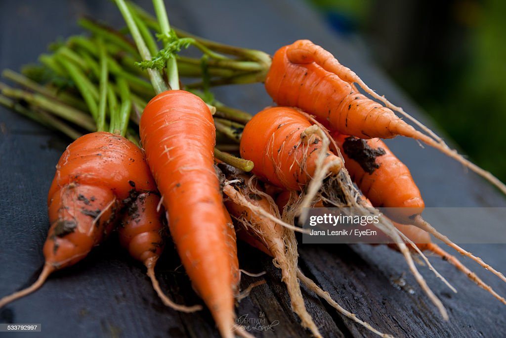 Freshly Picked Carrots : Foto stock