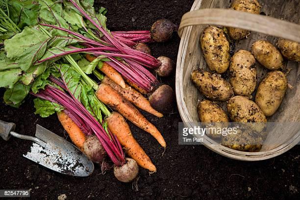 Freshly picked garden vegetables.