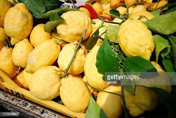 Frisch gepflückte Zitronen