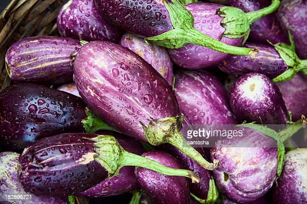 Freshly picked organic eggplants