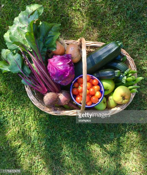 freshly picked organic fruit and vegetables in wicker basket - harvest basket stock pictures, royalty-free photos & images