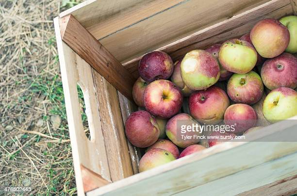 freshly picked - sursly stock pictures, royalty-free photos & images