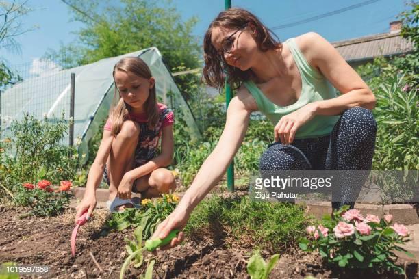 Recién recogido verduras de la huerta