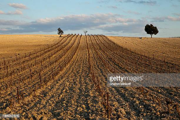 Freshly ploughed hillside with newly planted vines for sherry production near Jerez, Spain.