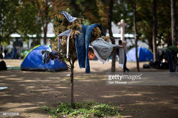 Freshly washed clothes are left to dry on a shrub by migrants in a public park near the train station on September 6 2015 in Belgrade Serbia Many...