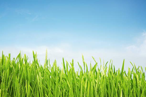 Freshly Watered Grassy Field Wall Art