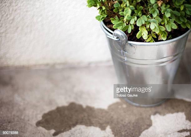 freshly watered - tobias gaulke stock-fotos und bilder