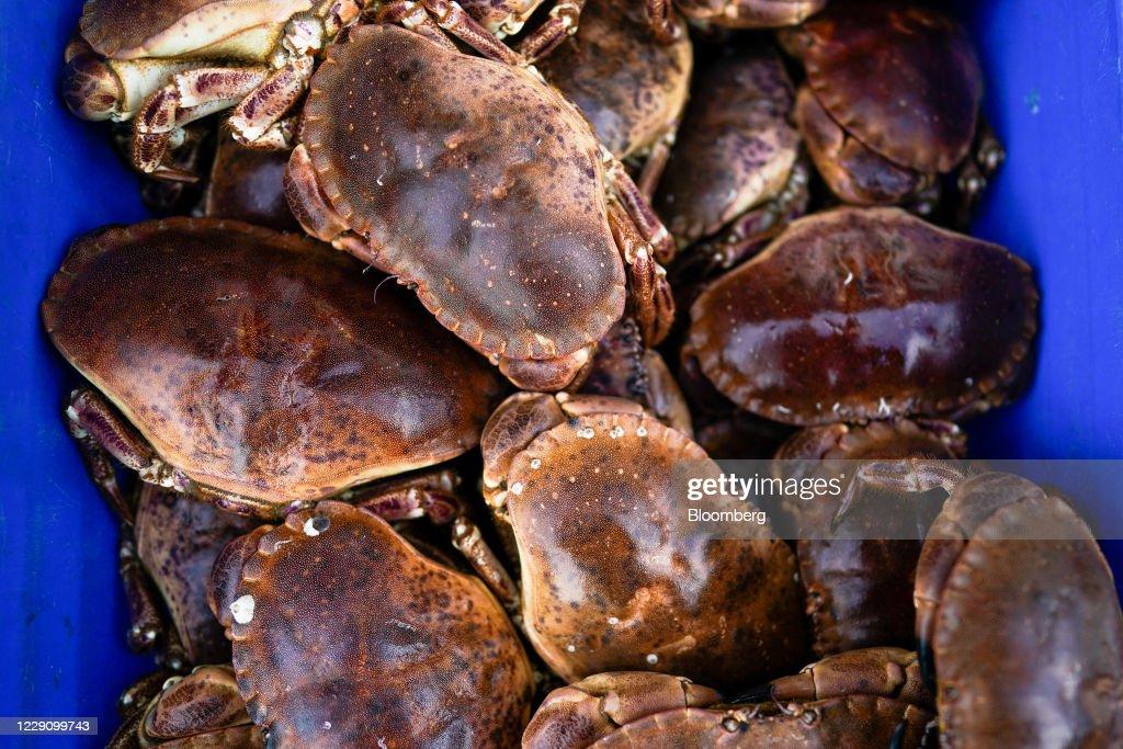 U.K. Shellfish Industry As Fishing Key To Brexit Talks : News Photo