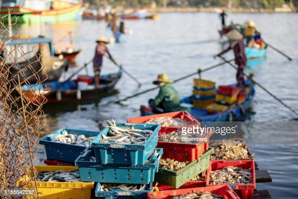 Freshlycaught fish sit in trays at Tan Quang market in Quang Nam province Vietnam on Wednesday June 26 2019 Fishermen are on the front lines of Asias...