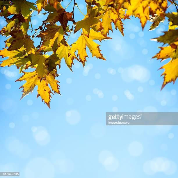 De la fraîcheur de l'automne