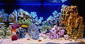 Freshwater aquarium decorated in a pseudo-marine style
