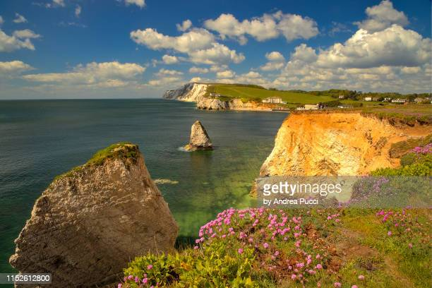 freshwater bay, isle of wight, united kingdom - 炭酸石灰 ストックフォトと画像