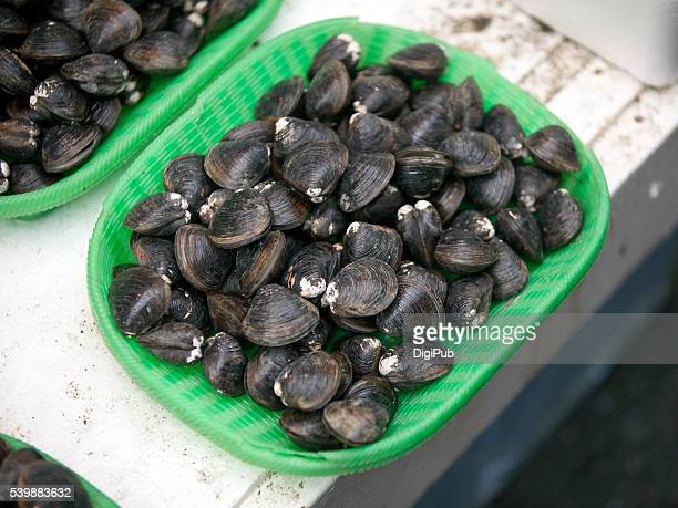 freshwater clams (japanese corbicula) displayed for sale - corbicula clam stock pictures, royalty-free photos & images