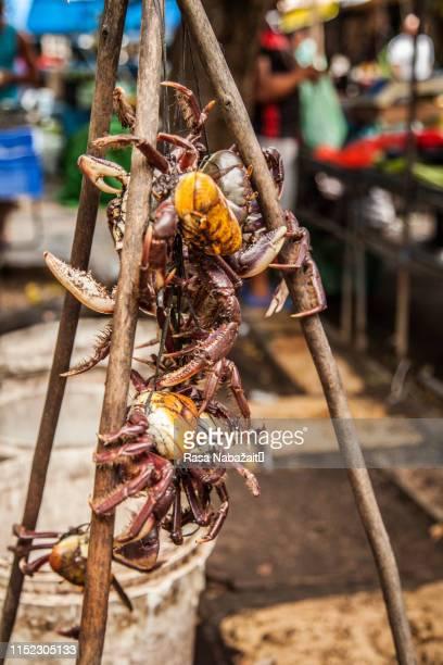 freshwater crab - recife stock-fotos und bilder