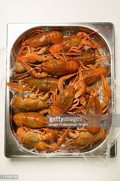 Freshwater crayfish in aluminium tray