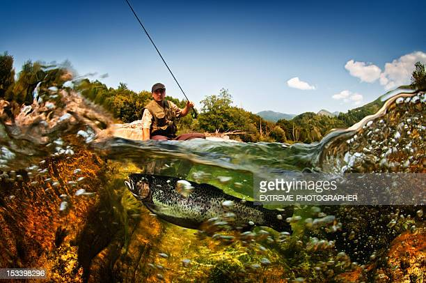 freshwater fish - fly fishing stock photos and pictures