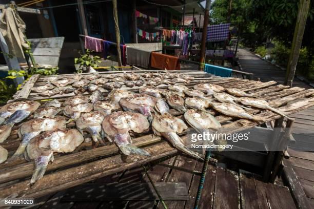 freshwater fish sun dried delicacy of borneo - 干物 ストックフォトと画像