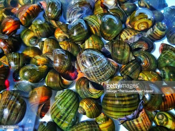 freshwater snails - freshwater stock pictures, royalty-free photos & images