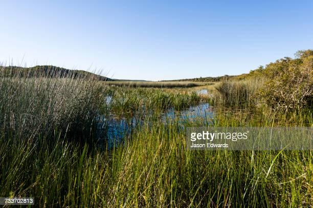 blue lake national park, queensland, australia. - sumpf stock-fotos und bilder