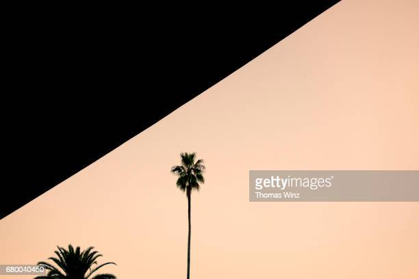 freway overpass and palm tree - oakland california stock pictures, royalty-free photos & images