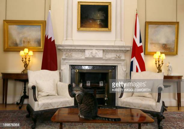 Freya, British Chancellor of the Exchequer George Osborne's cat, sits on a table in a room in Downing Street where a meeting between Britain's Prime...