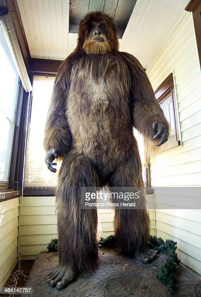 Loren Coleman has an eightfoottall taxidermy model of bigfoot on his Portland porch The model was created in wisconsin spent ten years in Minnesota...