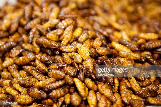 fried bugs - maggot stock photos and pictures