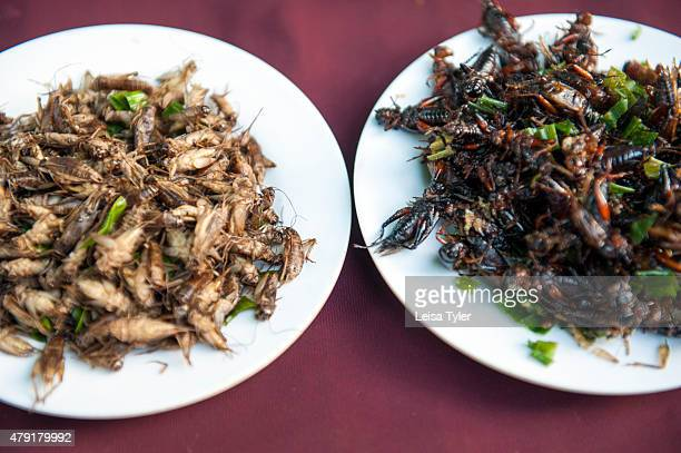 Fried cockroaches and cicadas for sale at a night market set up long the Mekong River in the Issarn town of Nong Khai