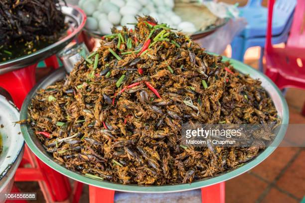 """fried crickets for sale on market stall in skuon, phnom penh, cambodia - cambodia """"malcolm p chapman"""" or """"malcolm chapman"""" stock pictures, royalty-free photos & images"""
