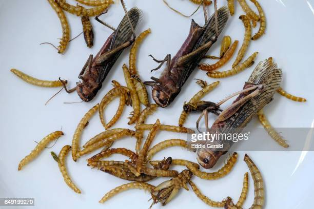 fried edible mealworms and grasshoppers - mealworm stock photos and pictures