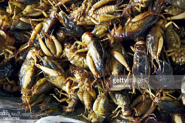 Fried locusts food for eating in Myanmar (Burma)
