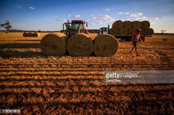 Friend of Jason Knapman helps load bails of hay onto a truck in a paddock containing a failed wheat crop on the Knapman family property located on...