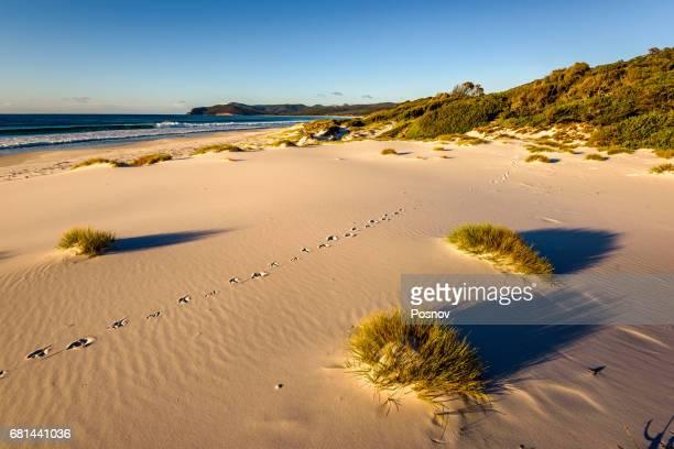 Friendly Beaches at Freycinet National Park