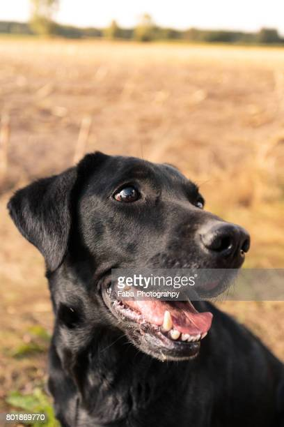 friendly dog - lächeln fotografías e imágenes de stock