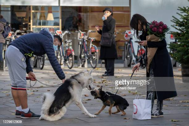 Friendly dogs socialise on the King's Road in Chelsea during the second lockdown of the UK's Coronavirus pandemic, when all but essential retailers...