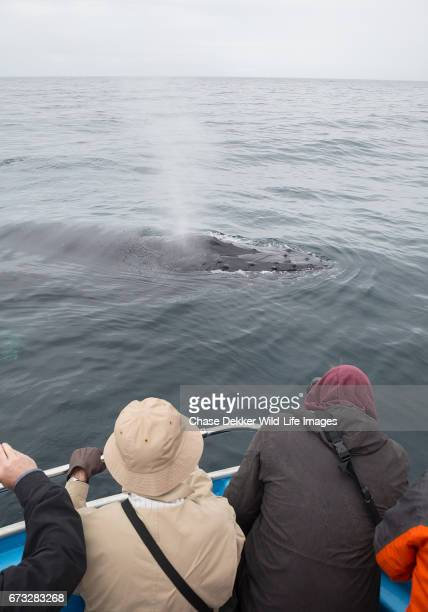 Friendly Humpback Whales