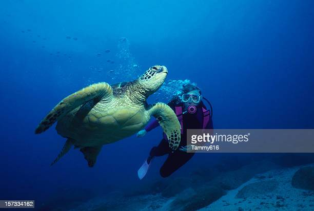 friendly turtle - oahu stock pictures, royalty-free photos & images