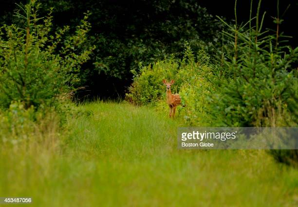 Friends Emily Hutcheson and Laurie Bent take a stroll in the woods near Hutcheson's Weston home on July 12 2013 along with Bent's dog Maisie a...