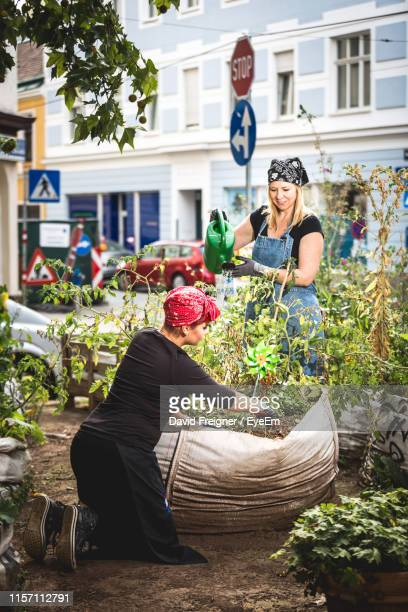 friends gardening in city - urban garden stock pictures, royalty-free photos & images